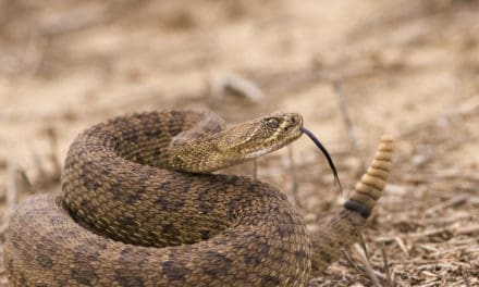 Dos and Don'ts In Snake Country