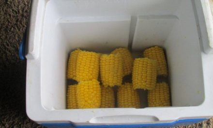 Cooler Corn on the Cobb