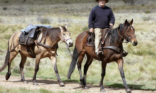 Equestrian Back Country Ride Over Carson Pass