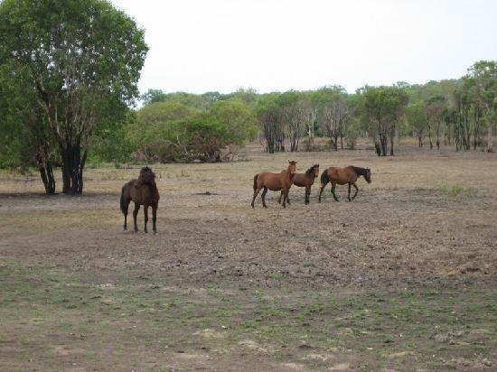 Wild Mustangs of the Litchfield Corral