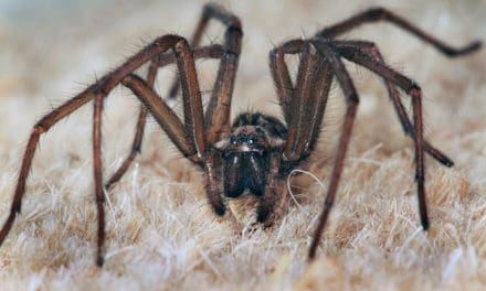 Think before you squish – Spiders in your home