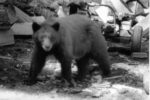 Bear outside the front door