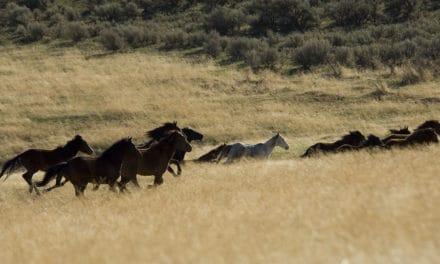 ~ Wild Horses ~