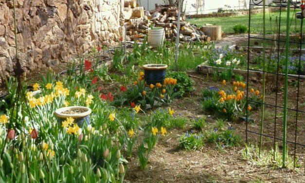Garden Sanctuary by Barbara Allen