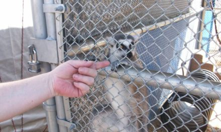 Barry Kirshner Wildlife Foundation, Lend A Hand