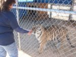 Tiger and Roberta