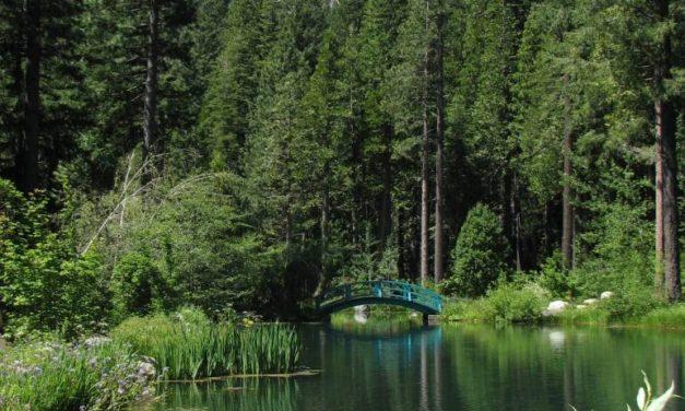 My Visit To Big Springs Gardens – Summer 2011