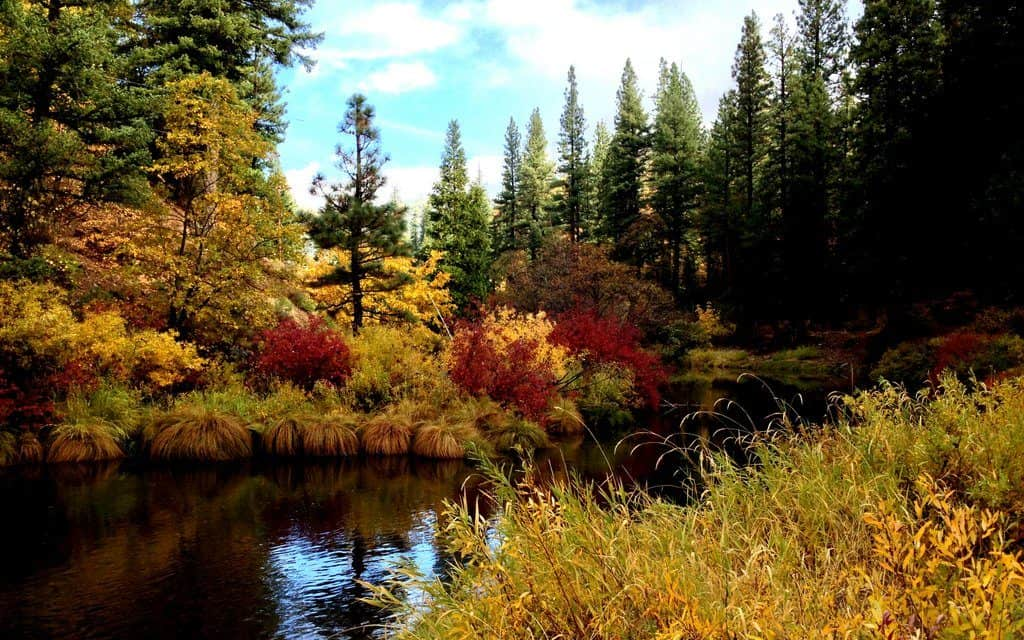Fall Colors of Plumas County