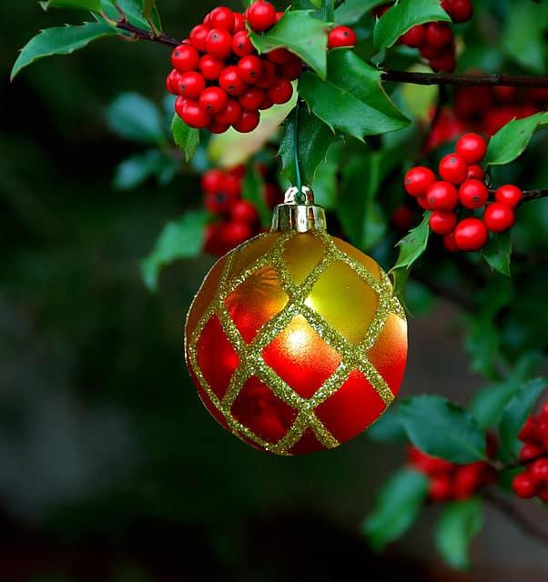 The Jolly Christmas Holly
