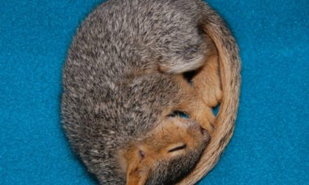 Snug In The Snow…Hibernation