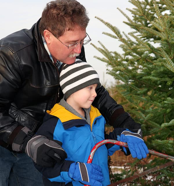 Recipe For A Smooth Christmas Tree Cutting