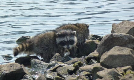 Critters Along The Way