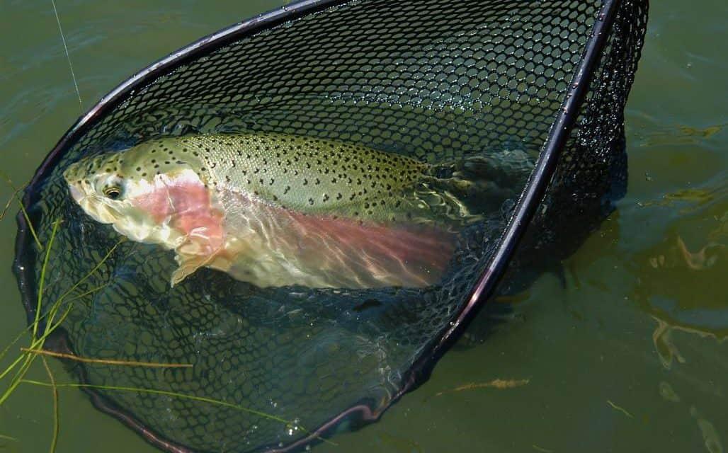Fantastic Fall Fishing and Hunting, Lake Almanor