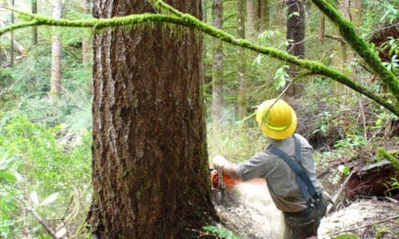 Cutting Firewood Safely