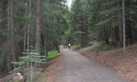 Exercise In The Peace Of Nature,  Lake Almanor Recreation Trail