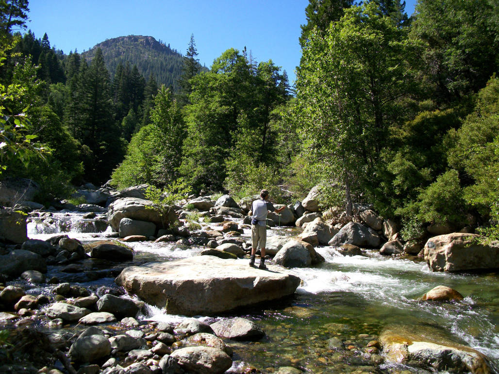 Fly fishing the north fork yuba river mountain valley living for Yuba river fishing report