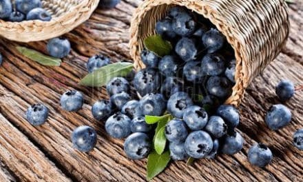 The Power of Blueberries