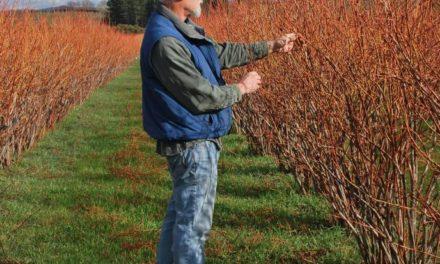 Sierra Cascade Blueberry Farm, Lets Eat Local