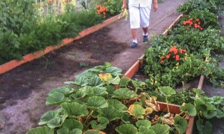 Rethinking the Garden