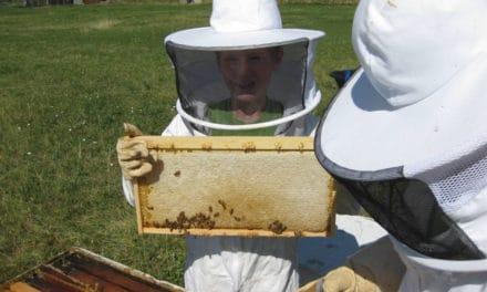 Keepin' Bees