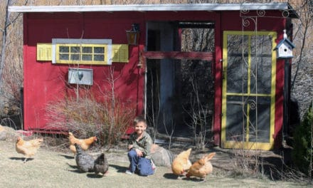 Growing Chickens For Fun, Profit, and Breakfast Eggs