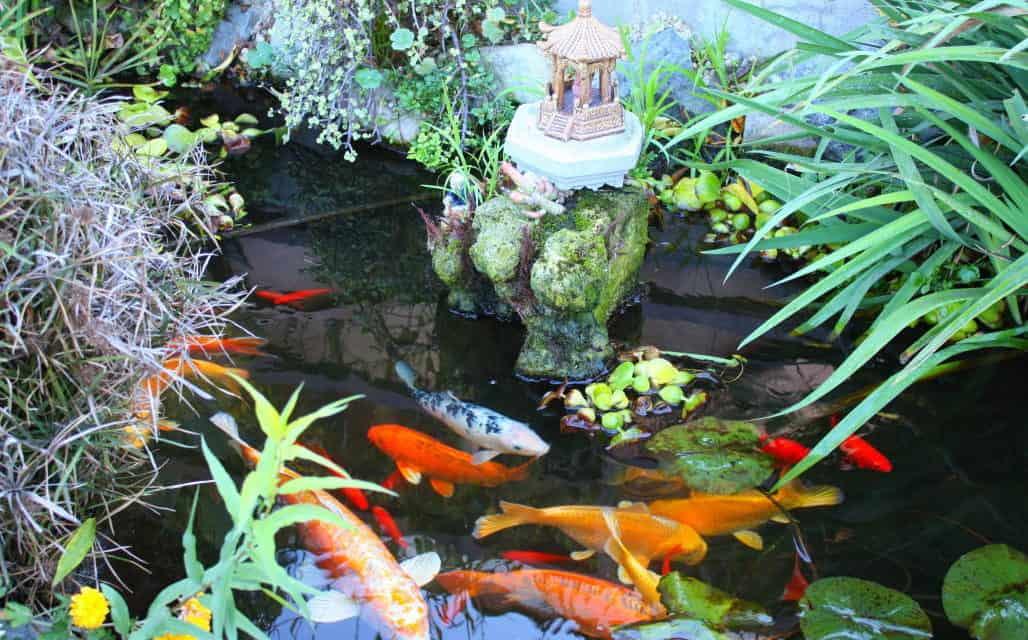 Water Wise Fish Talk