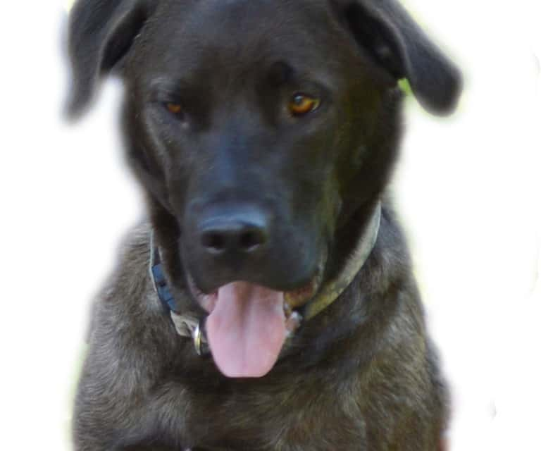 Tank On Travel, Funny dog story, Rescue dog's column