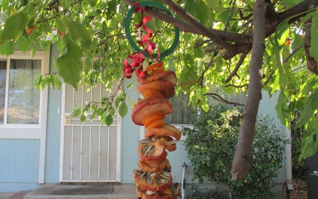 Bird Feeders to Make With The Kids