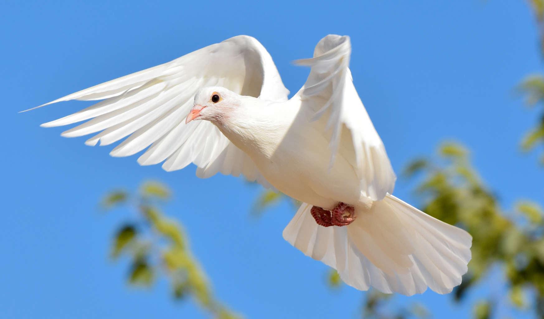 Wondrous White Doves Mountain Valley Living