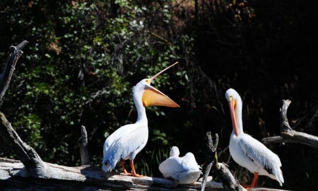 Wildlife Watching at Baum Lake