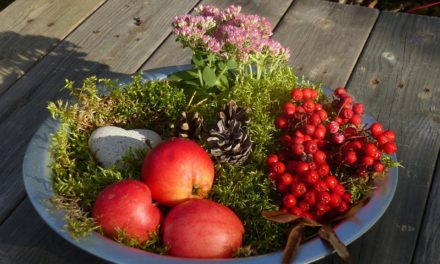 Bringing Nature Indoors For Holiday Decor