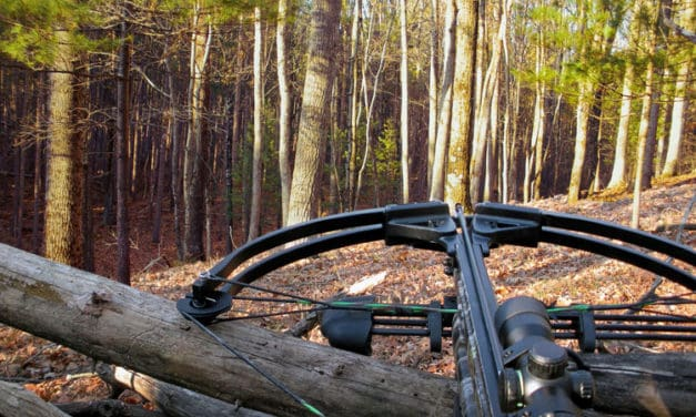 When Are Crossbows Legal?