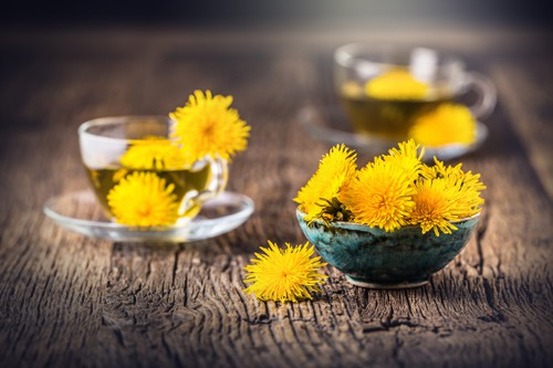 Food From The Wild- Dandelions
