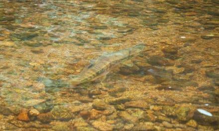 A Fish Tale -Coleman National Fish Hatchery