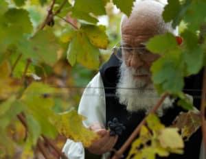 Monk in the vineyard. Vina CA