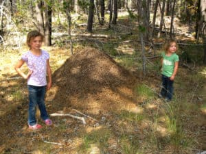 Red Mound Ant Nest