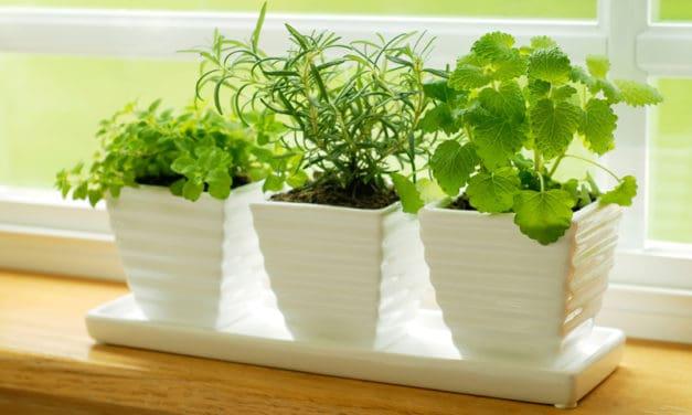 Grow A Kitchen Herb Garden