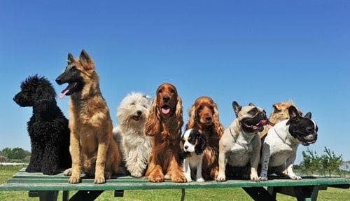 Lassen County Pups On Parole
