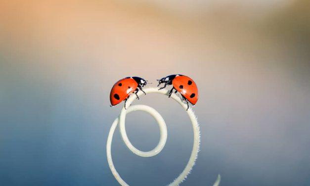 Twelve Ladybug Beauties