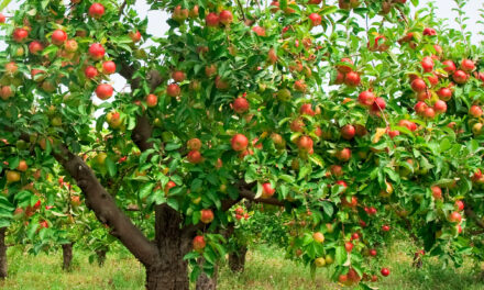 Johnny Appleseed Days –  Paradise, CA Oct. 2-3, 2021 – Annual Event